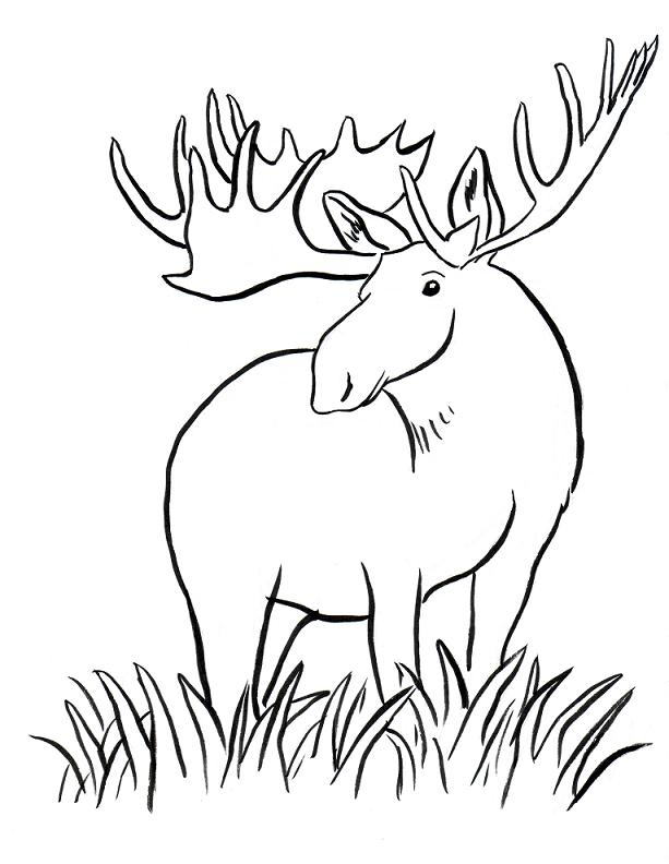 Moose Coloring Pages | Coloring Pages For Girls | Kids Coloring