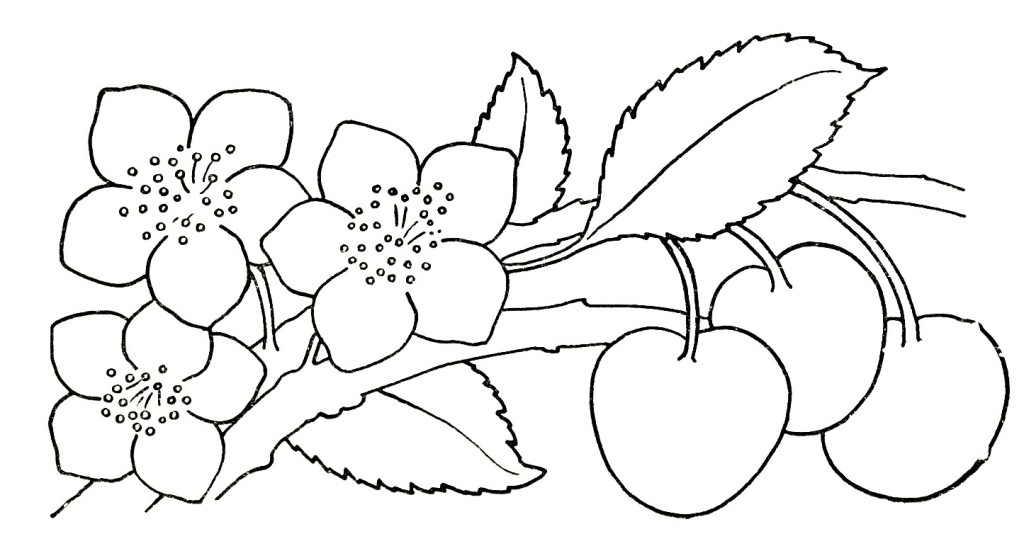 Roses And Butterflies Drawings Roses Coloring Pages