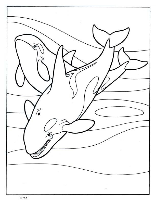 Killer Whale Coloring Pages Coloring Home Killer Whale Coloring Pages