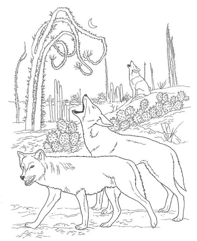 Free Desert Animals Coloring Pages Coyote Wallpaper | ViolasGallery.