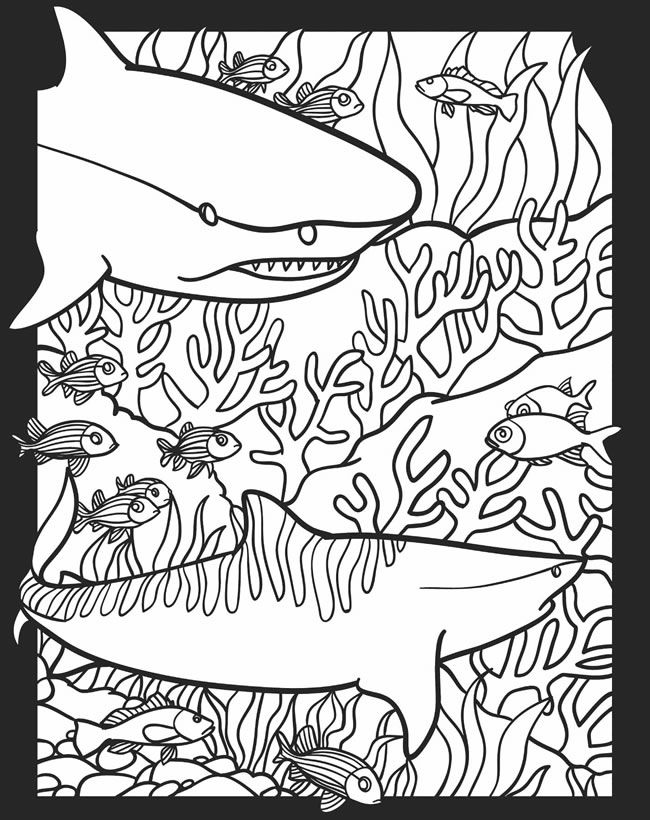 Free Coloring Pages Of Nocturnal Animals : Pictures of nocturnal animals coloring home