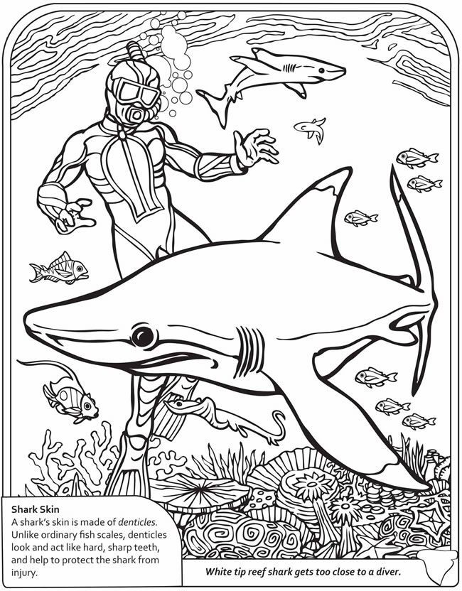 Whale Shark Coloring Pages Coloring