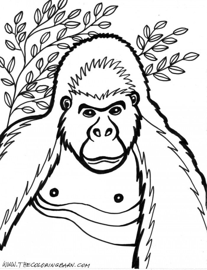 Gorilla Coloring Pages To Print | 99coloring.com