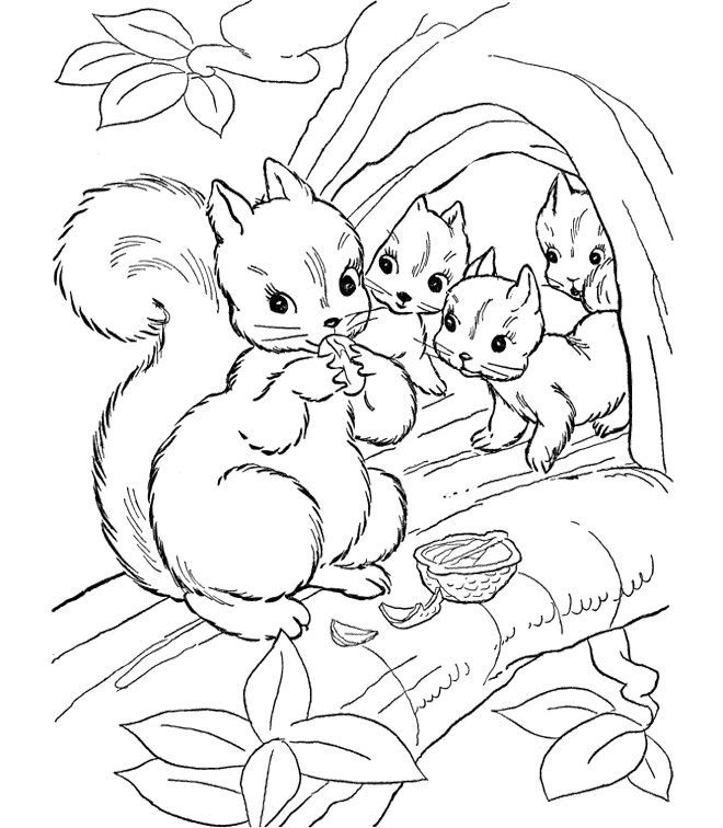 Cute Squirrel Pages Coloring Pages