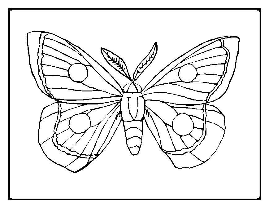 Butterflies Printables AZ Coloring