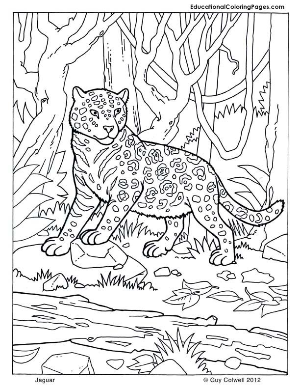 Jaguar coloring | Animal Coloring Pages for Kids