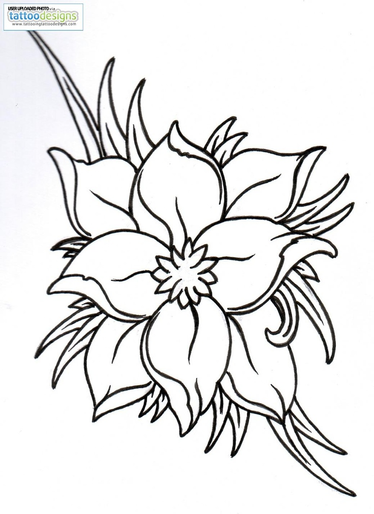 Lily Flower Outline - AZ Coloring Pages