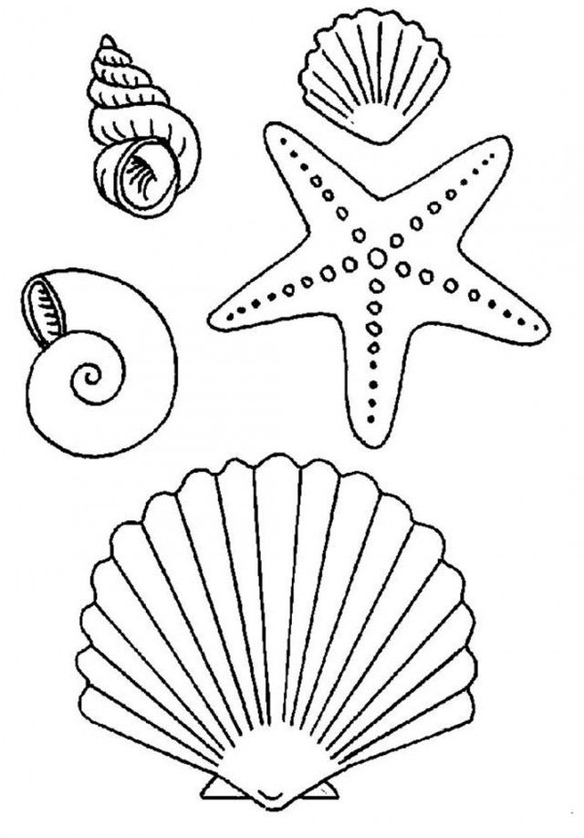 Download Seashell And Starfish Coloring Pages Or Print Seashell