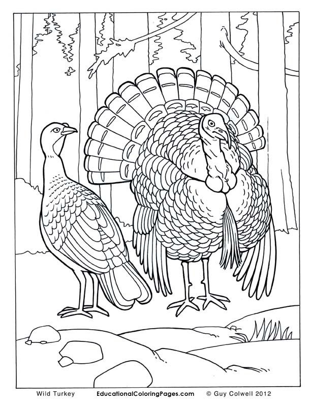 realistic free animal coloring pages - photo#16