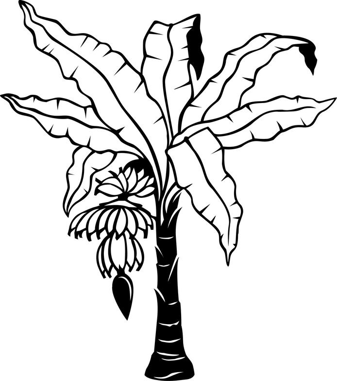 Banana Tree Leaves Coloring Coloring Pages