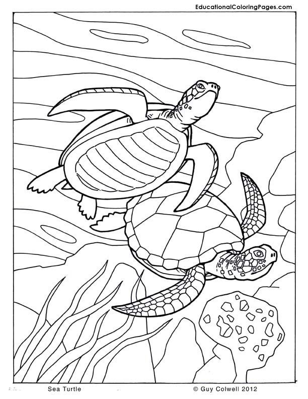 Coloring Pictures Of Turtles - AZ Coloring Pages