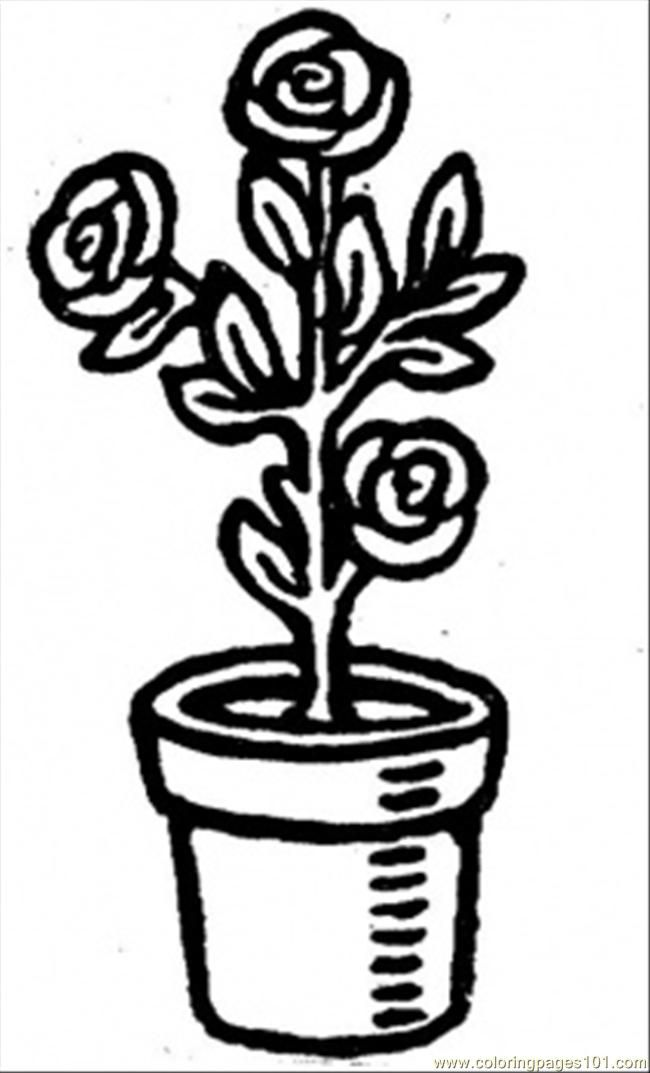 Coloring Pages Roses In A Pot Natural World Flowers