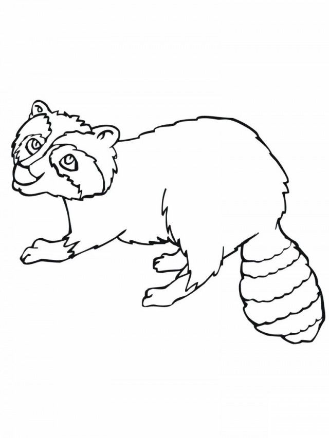 Baby Raccoon Coloring Pages - Coloring Home