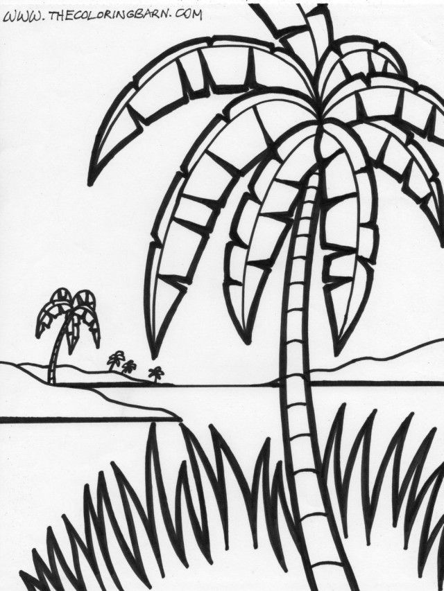 palm tree pictures coloring pages - photo#34