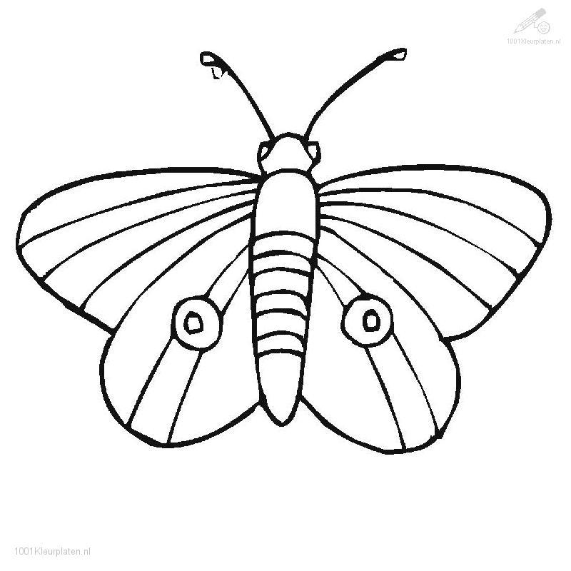 coloring pages painted lady butterfly - photo#8