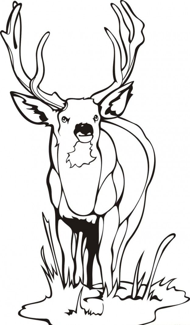 Deer For Kids AZ Coloring Pages