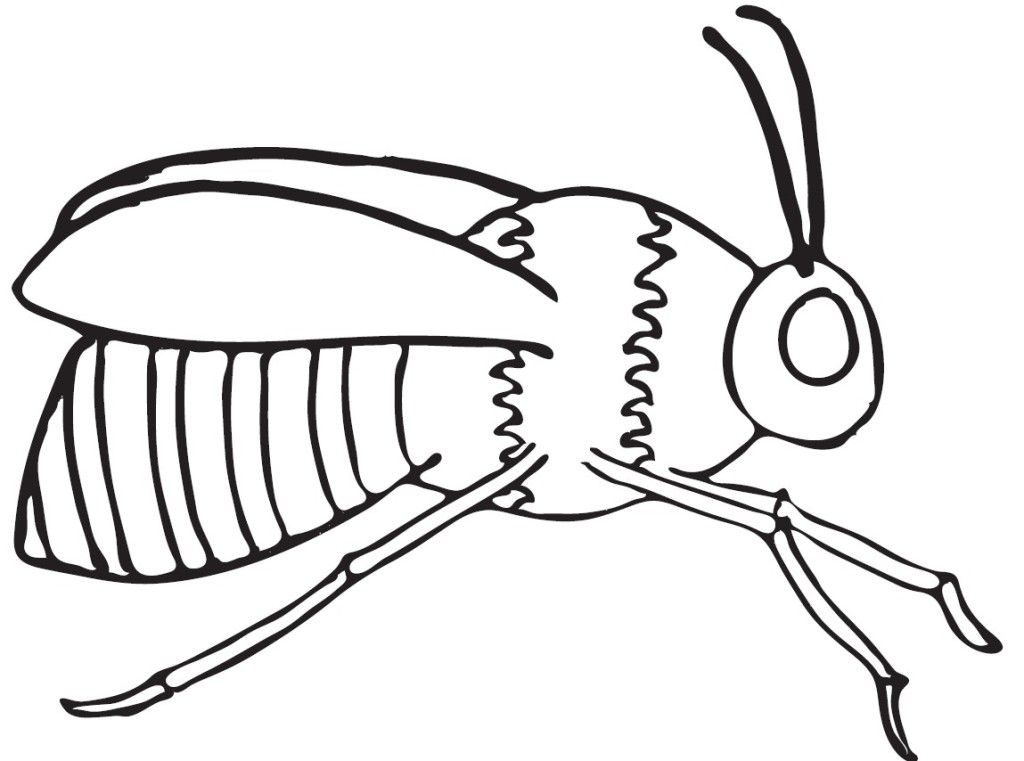free bee coloring pages - photo#43