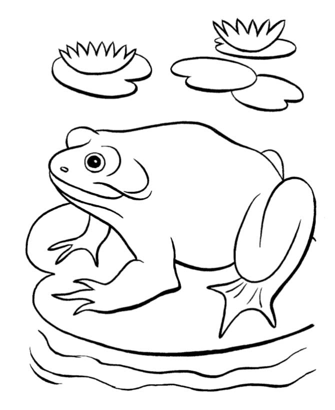 pond habitat coloring pages - photo#25
