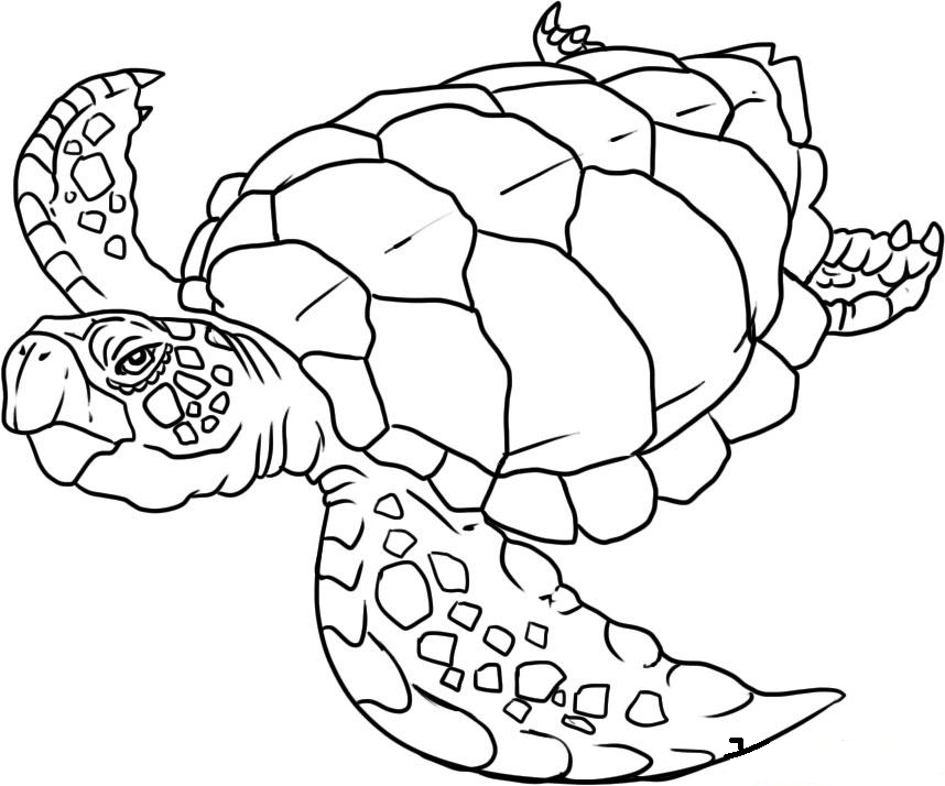 Coloring Pages Sea Turtle Printable Sheet Anbu