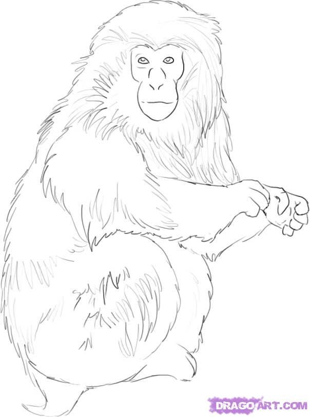 Line Drawing Monkey Face : Picture of a monkey face coloring home