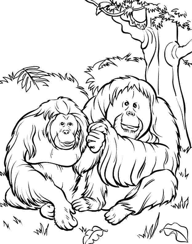 funny cartoon orangutans Colouring Pages (page 3)