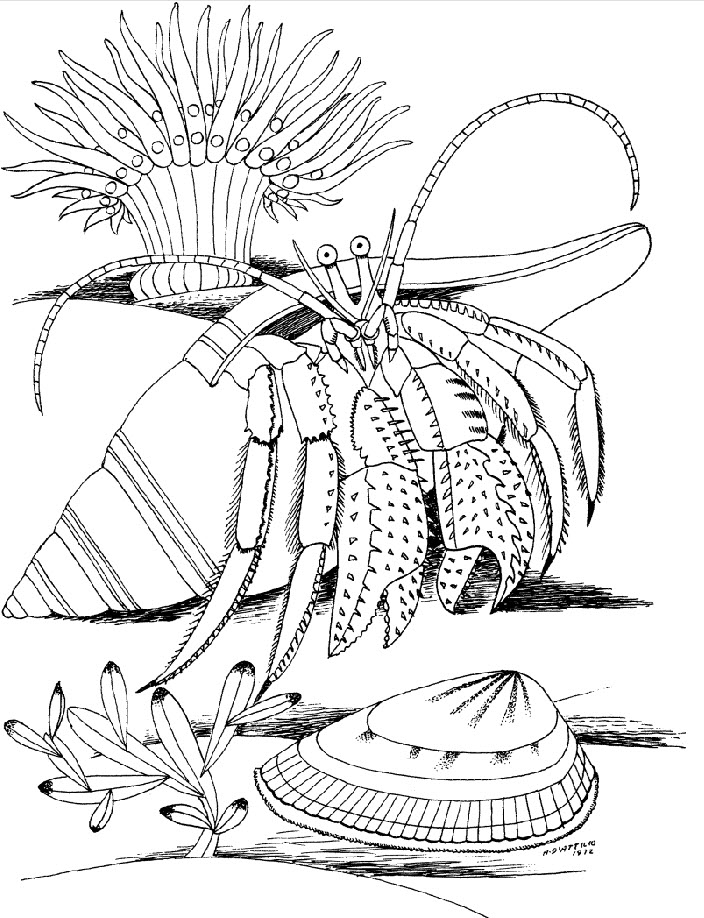 Coral Reef Coloring Pages For Kids Az Coloring Pages Reef Coloring Pages