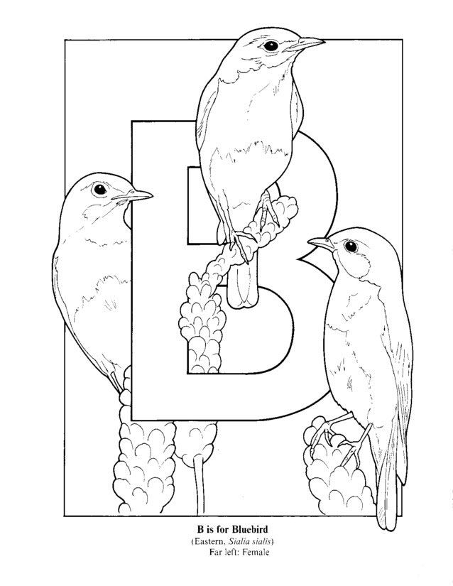 Letter B Coloring Pages For Preschoolers : Letter b coloring pages for preschoolers home