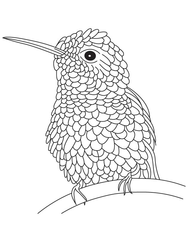 Hummingbird Coloring Page - Coloring Home