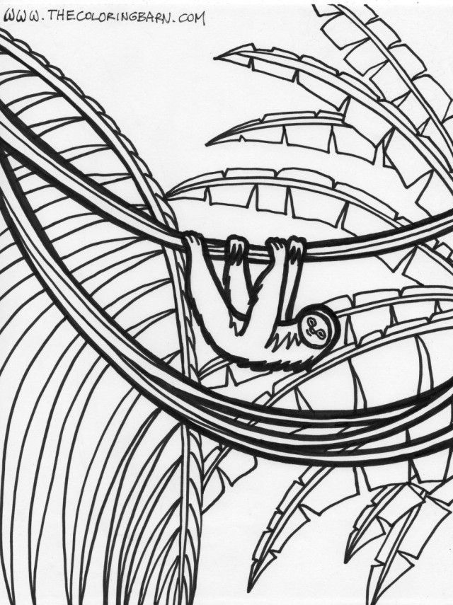 Amazon Rainforest Coloring Pages Free Download Kids