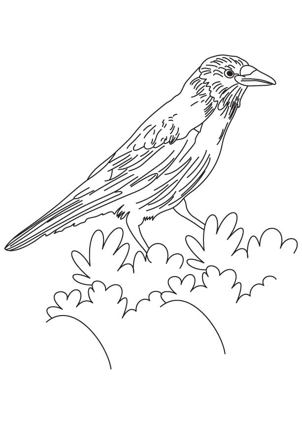 Red Tailed Hawk Coloring Page Coloring Home Tailed Hawk Coloring Page