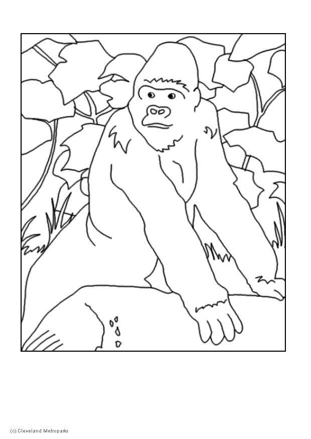 Coloring page gorilla - img 5729.