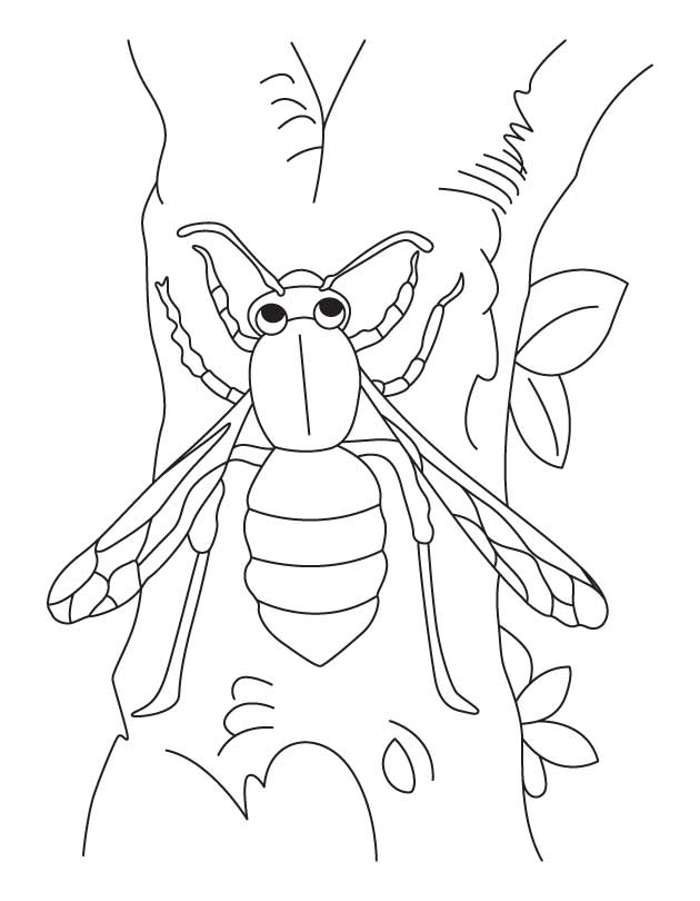 Free Coloring Pages Of Yellow Jackets Yellow Jacket Coloring Page