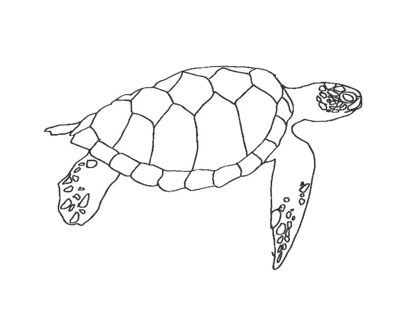 Olive Ridley Sea Turtle coloring page | Free Printable Coloring Pages | 635x808