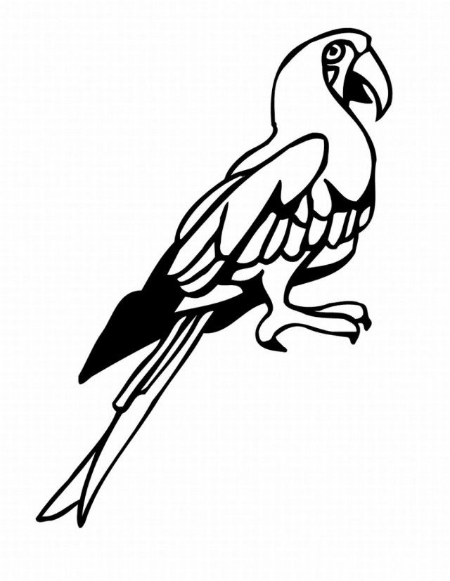 free coloring pages tropical birds - photo#46