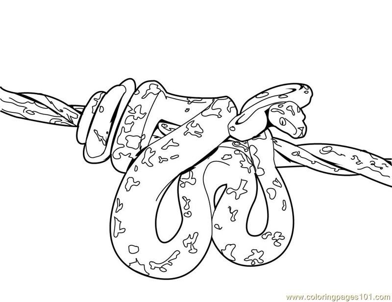 coloring pages snakes scary : Printable Coloring Sheet ~ Anbu