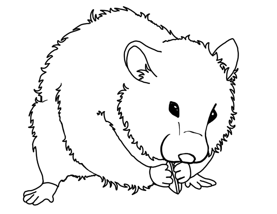 Hamster Coloring Pages Az Coloring Pages Hamster Coloring Page