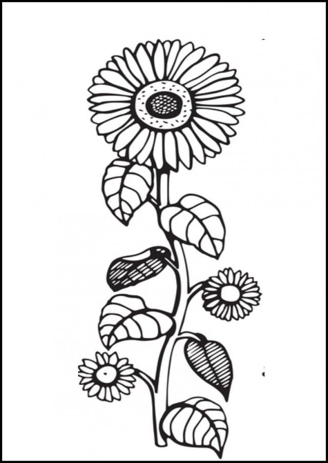 Black And White Sunflower Coloring Pages KidsColoringPics 222166