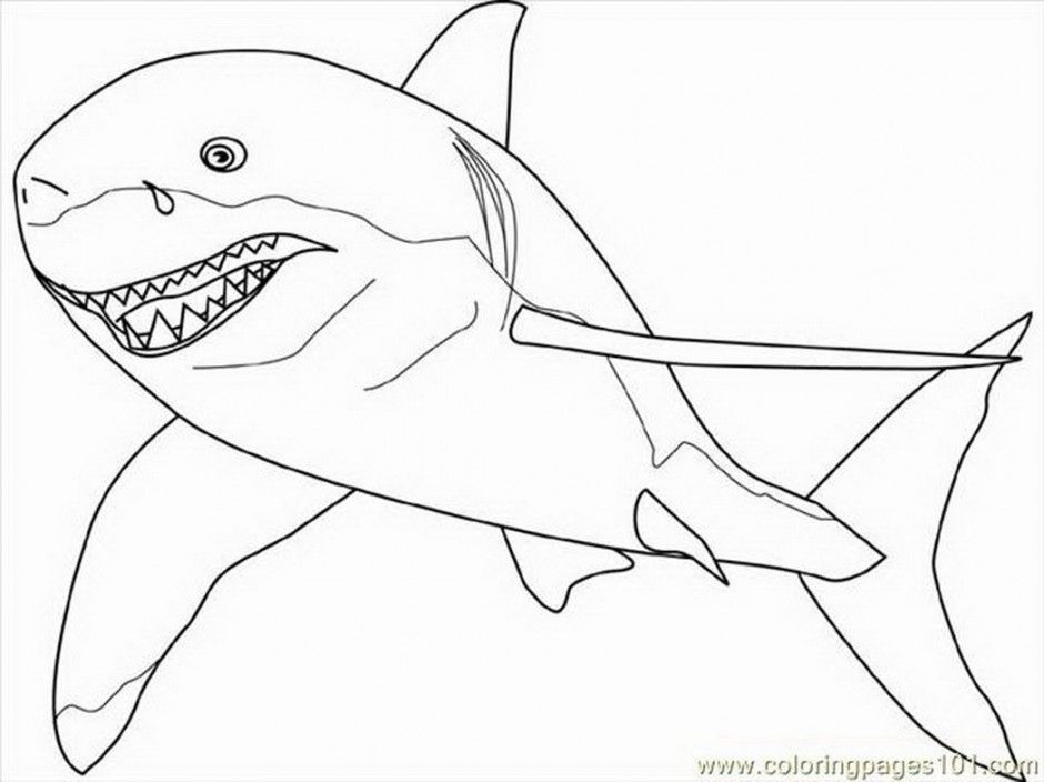 Great White Shark Outline - Coloring Home