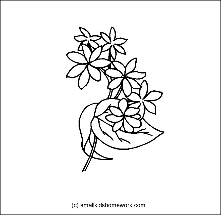 Line Drawing Jasmine Flower : Outline flowers az coloring pages