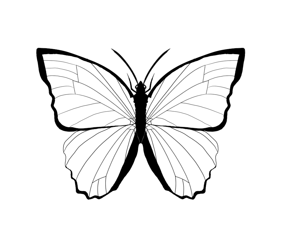 Butterflies Outline Coloring Home