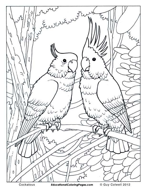 free wild birds coloring pages - photo#31