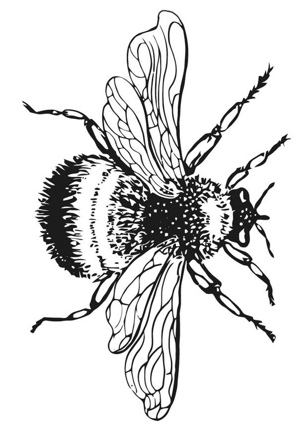 Bumble Bee Coloring Pages For Kids Coloring Home