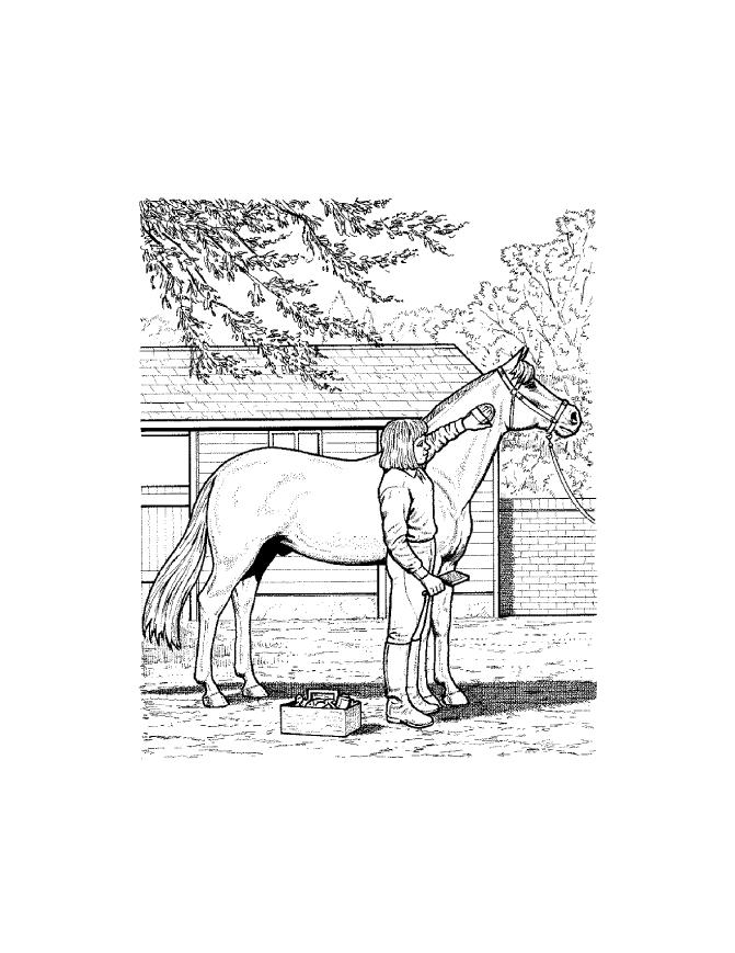 Real horse coloring pages coloring home for Realistic horse coloring pages for adults