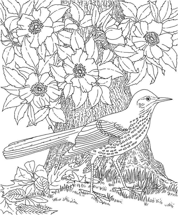 Botany Coloring Pages - Coloring Home