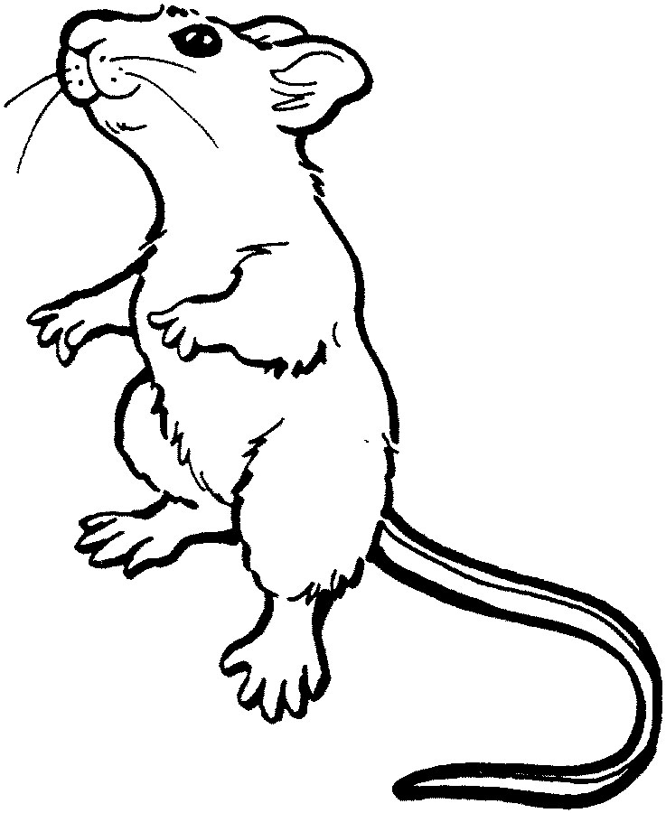 gerbil coloring pages - gerbil coloring pages az coloring pages