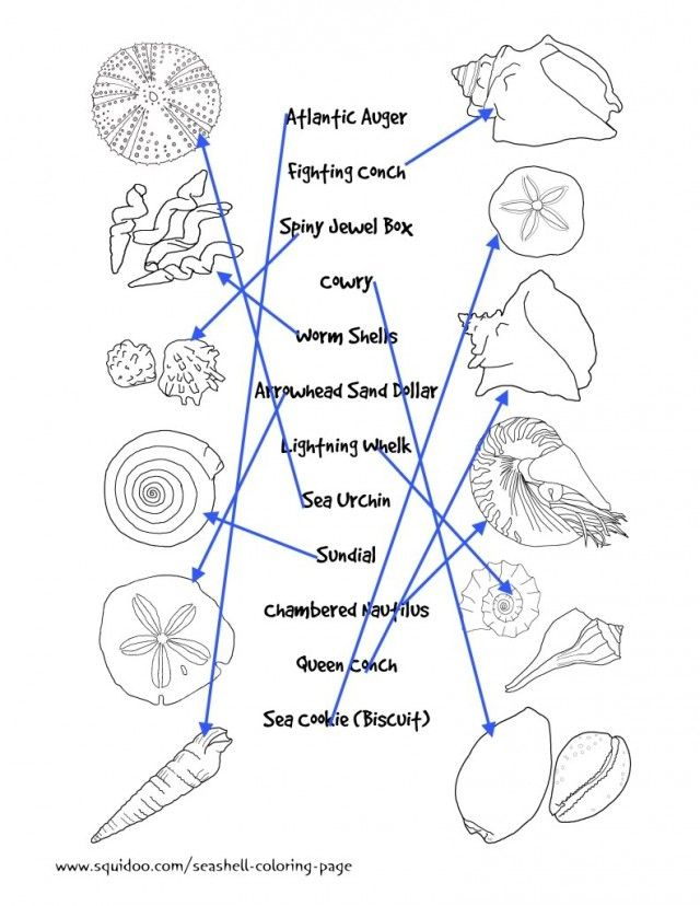 Seashell Identification Matching Page For Kids Seashells By