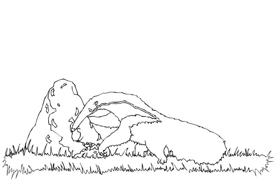 Coloring page anteater foraging - img 9440.