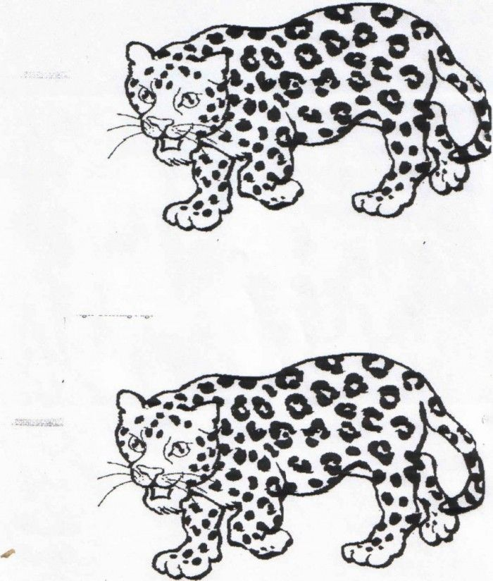 Jaguar Coloring Page Coloring Home