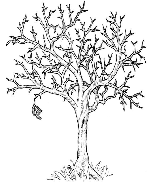 Tree Coloring Pages Autumn Fall Leaves Page Kids
