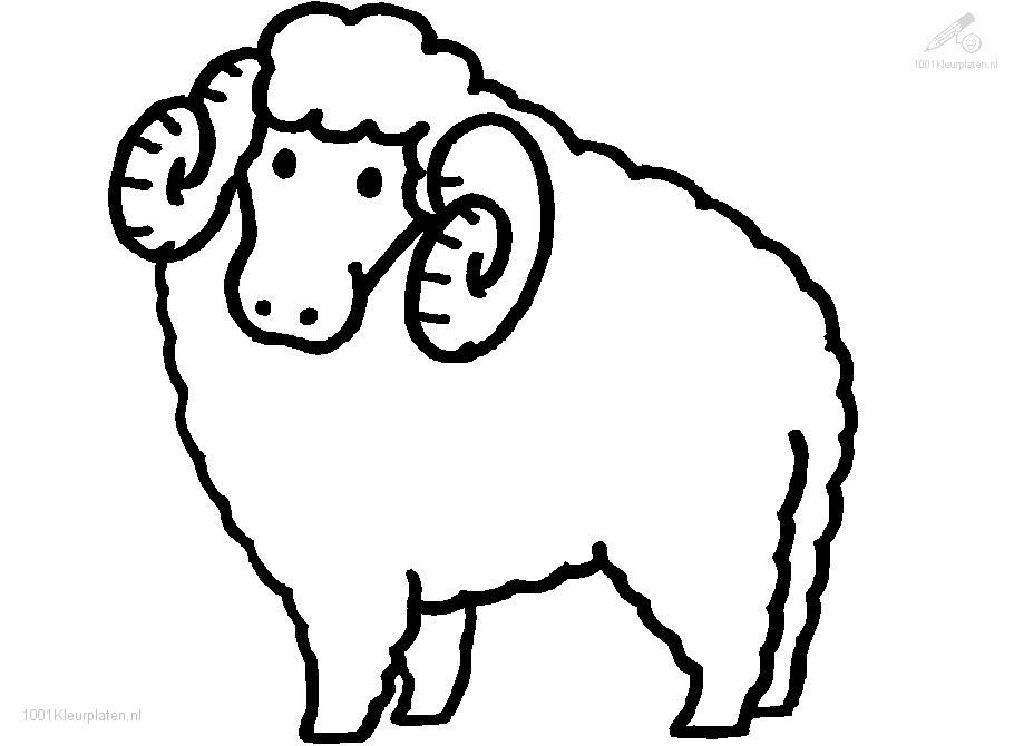 Sheep Coloring Pages Print